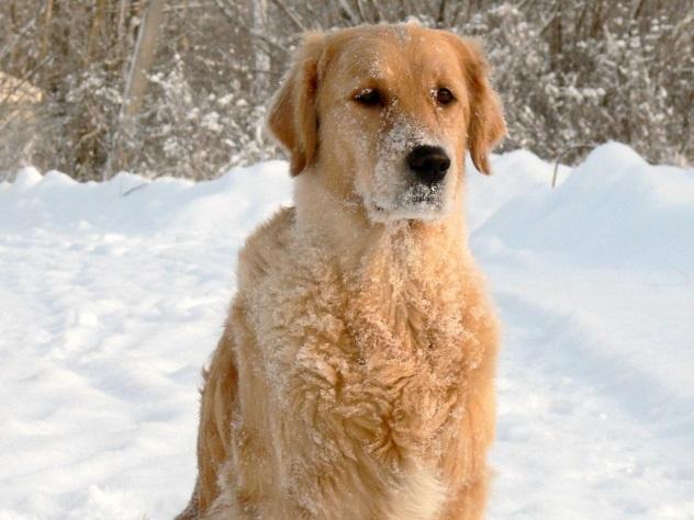 ВСША собачка спасла жизнь парализованному владельцу, пролежав нанём 20 часов