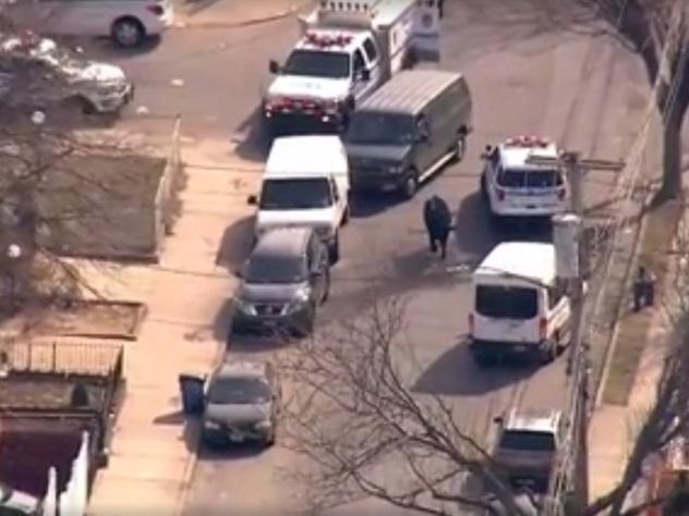 Полицейские Нью-Йорка устроили погоню засбежавшим сбойни быком