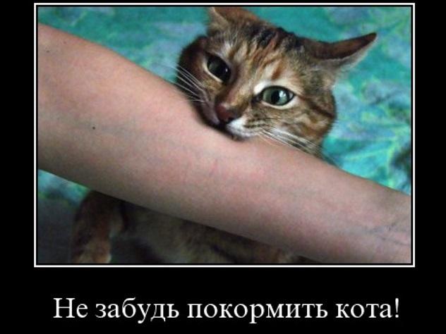 накормите кота картинки вперед скажу, что