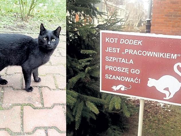 Кот-терапевт