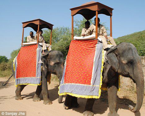 ... и слонов