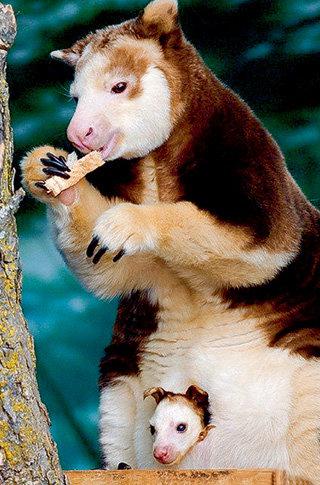 Малышка Нокопо привлекла в зоопарк в полтора раза больше посетителей