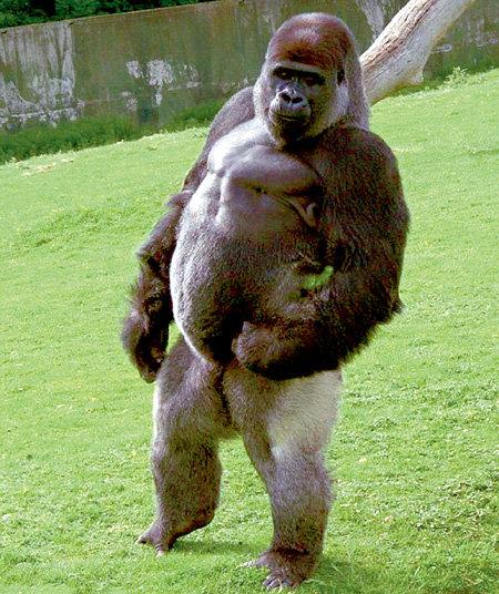 Маленький шажок для Амбама - огромный шаг в эволюции