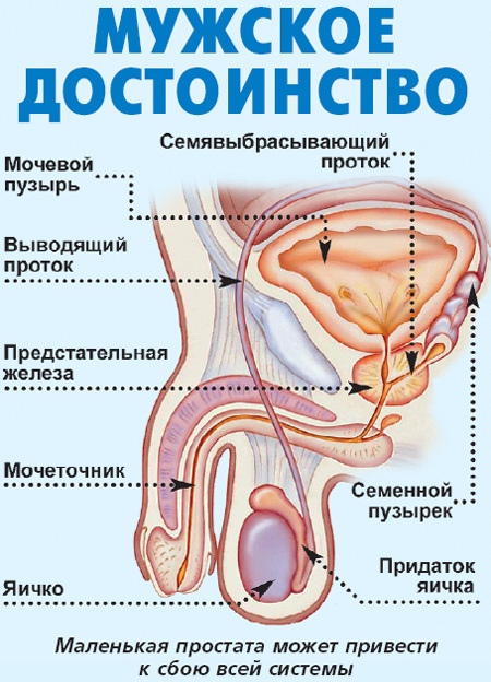 Любовь - лекарство от простатита| EG.RU