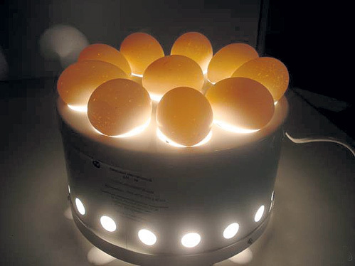 Качество яйца проверяют на овоскопе. Галогенная лампа просвечивает белок и желток, выявляя пятна и инородные включения. Цена - от 500 руб.