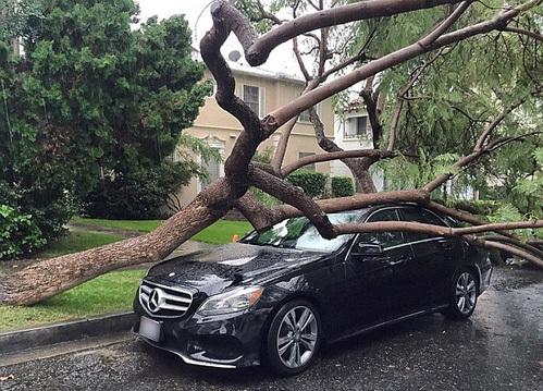 Упавшее дерево лишь слегка испортило товарный вид «мерса» Райана стоимостью $51,8 тыс.