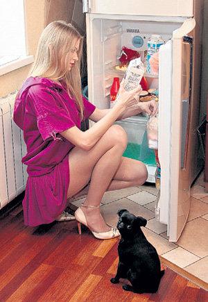 Собачка Багира породы гриффон за версту чует хлебное место