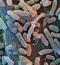 Благодаря Bacillus F можно прожить до 140 лет