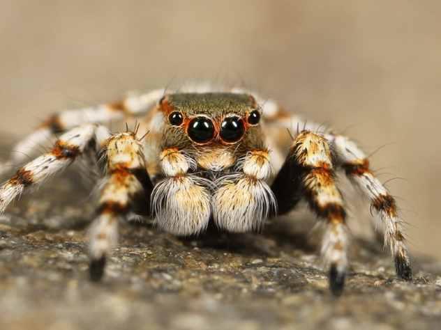 ВТюменской области стало больше тарантулов