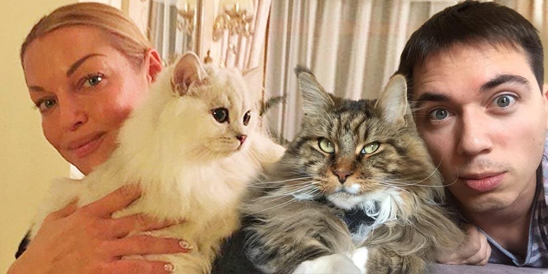 Котики звезд, Волочкова, Газманов